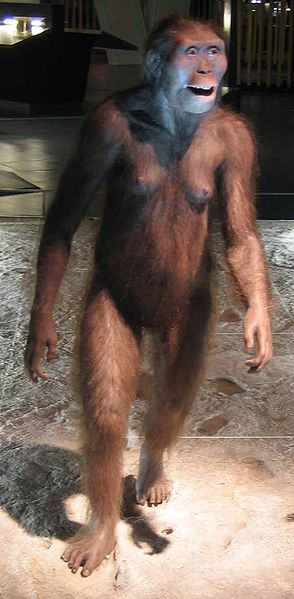 Australopithecus afarensis _ Reproduktion von Cosmocaixa, Barcelona