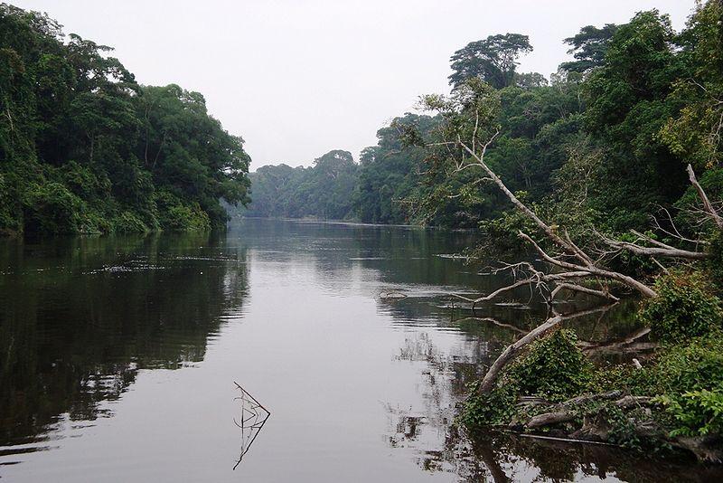 Tropischer Regenwald in Westafrika