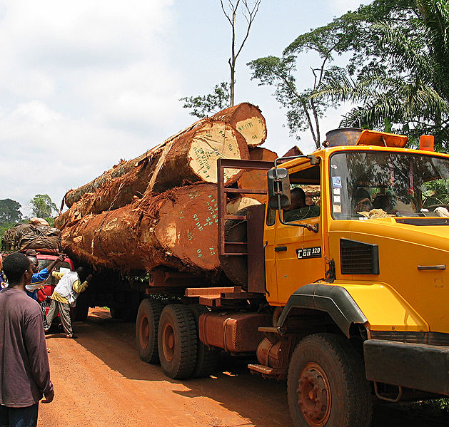 Truck mit gefällten Urwaldbäumen