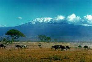 Savanne mit dem Kilimandscharo