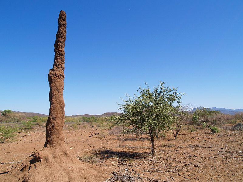 Termitenhügel in Kenia