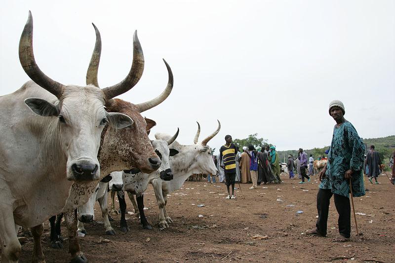 Tiermarkt in der Nähe von Bamako (c) ILRI