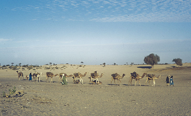 Kamelherde in Mali (c) H. Grobe